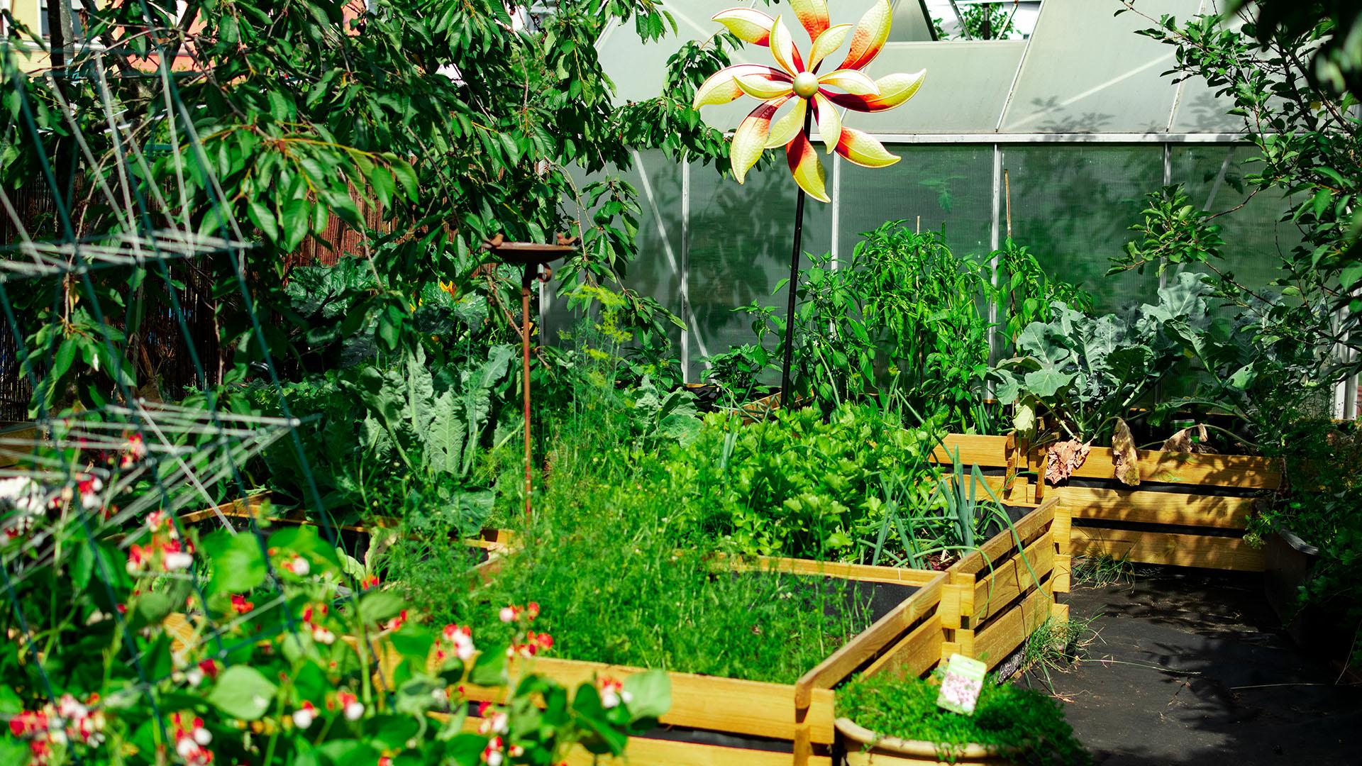 Anpflanzübersicht Gemüse gute und Schlechte Nachbarn