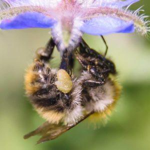 Steingärten bienenfreundlicher Gestalten