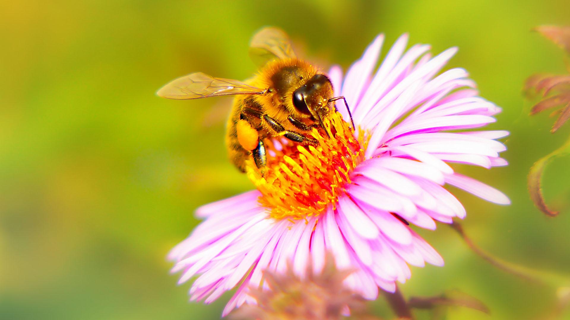 Balkonkästen bienenfreundlich anpflanzen