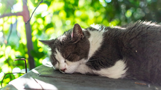 Katzenstreu im Garten verwenden